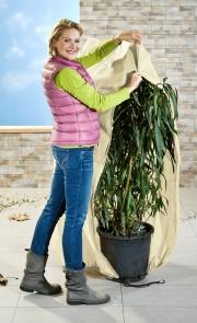 Protection pour plante, beige